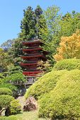 stock photo of manicured lawn  - Manicured plants with a Japanese temple beyond taken at the Japanese Tea Garden in San Francisco - JPG