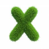 picture of letter x  - Letter x of green grass - JPG