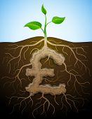 pic of bine  - Roots and tuber in shape of pound symbol sprout - JPG