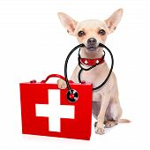 foto of medical  - chihuahua dog as a medical veterinary doctor with stethoscope and first aid kit isolated on white background - JPG