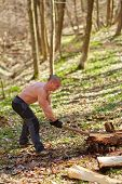 picture of ax  - Strong caucasian shirtless woodcutter splitting wood in the forest with an ax - JPG
