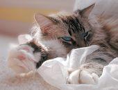 Cat Nap 2 poster