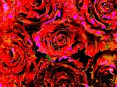 digitally enhanced photograph of a display with hocus-pocus roses, expressing the ffelin of love and