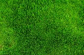 stock photo of grass area  - Green grass texture from a soccer field top view - JPG