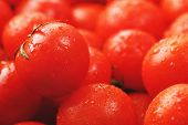 Lots Of Fresh Ripe Tomatoes With Drops Of Dew. Close-up Background With Texture Of Red Hearts With G poster