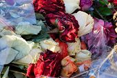 Colored Dry Wilted Buds Flowers Of Roses In A Bouquet In Cellophane In A Pile Of Garbage poster
