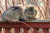 At The Top Of The Wooden Fence Lies A Cute  Cat Against The Background Of A Village House And Looks  poster