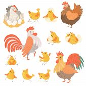 Chicken And Rooster. Funny Domestic Farm Animals Birds Eggs Pollo Vector Cartoon Characters. Charact poster