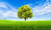 Green Summer Landscape Scenic View Wallpaper. Beautiful Wallpaper. Solitary Tree On Grassy Hill And  poster