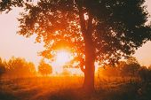Sunset Or Sunrise In Misty Forest Landscape. Sun Sunshine With Natural Sunlight Through Oak Wood Tre poster