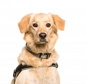 Mixed-breed dog, 3 years old, in front of white background poster