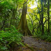Jungle forest with tropical trees. Adventure background