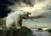 stock photo of north-pole  - White Polar Bear Hunter on the Ice in water drops - JPG