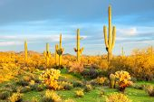 stock photo of ocotillo  - Sonoran Desert bathing in day - JPG