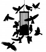 Editable vector silhouettes of birds at a hanging feeder with all birds as separate objects