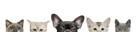 foto of cat dog  - Cropped view of dog head and cat heads in front of white background studio shot - JPG