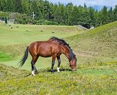 image of horses eating  - Horses in a field eating grass and relaxing - JPG