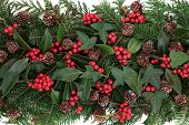 picture of mistletoe  - Winter and christmas flora with red berry holly - JPG