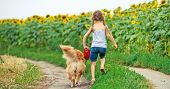 picture of girl walking away  - little girl walks on the leash with a golden retriever - JPG