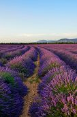 pic of plateau  - Stunning landscape with lavender field at evening - JPG