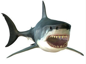 stock photo of apex  - The Great White Shark is an apex - JPG