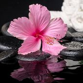 stock photo of hibiscus flower  - still life of pink hibiscus flower with drops and white towels on zen stones in ripple water closeup - JPG