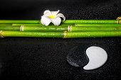 picture of frangipani  - beautiful spa still life of symbol Yin Yang frangipani flower and natural bamboo on zen basalt stones with dew closeup - JPG