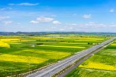pic of rape-seed  - Aerial view of road passing through a rural landscape with blooming rape in northern Greece  - JPG