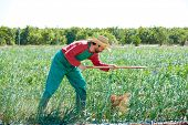 image of orchard  - Farmer man working in onion orchard field with hoe tool - JPG