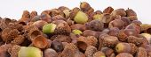 picture of acorn  - A pile of acorns isolated on a white background - JPG