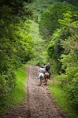 stock photo of vaquero  - Tourists on horseback in Costa Rican cloud forest - JPG