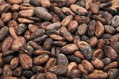 picture of cocoa beans  - Cocoa beans on burlap Food ingredients Close up - JPG