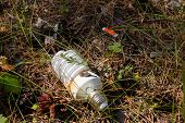 Light Bulb And Batteries - Hazardous Waste In The Woods poster