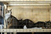 Cats With Intelligent, Sad Eyes At A Special Charity Exhibition Looking From Lattice Of Cell , Expec poster