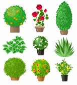 Garden Plants Set. Outdoor Garden Landscape Isolated Plants On A White Background. Set Of Nine Detai poster
