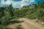 Dirt Road On Hilly Terrain Covered By Bushes And Trees poster