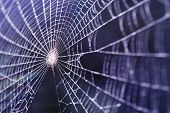 picture of spider web  - spider web covered by small water drops