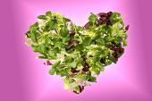stock photo of escarole  - A heart of green salad  - JPG