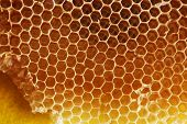 pic of bee-hive  - Honey bee honeycomb - JPG