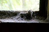 Cobweb Covered Window Sill And Handle