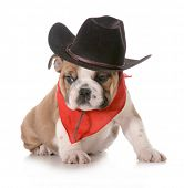 picture of dog clothes  - country dog  - JPG