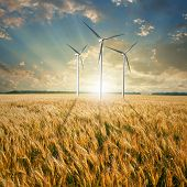 picture of wind wheel  - Wind generators turbines on wheat field - JPG