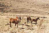 image of veld  - Horses on pasture in hot summer day - JPG