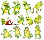 foto of cute frog  - Illustration of different positions of frogs - JPG