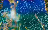 picture of cobweb  - Cobwebs on the grass with dew drops - JPG