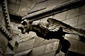 picture of gargoyles  - Gargoyle on Sacre Coeur Basilica in Paris, France.