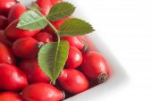 picture of wild-brier  - rote fruits wild roses in a bowl
