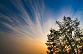 foto of siberia  - Impressive red sunset and blue sky with tree branches at Baikal Lake Siberia - JPG