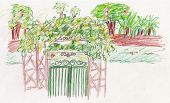 pic of english ivy  - garden green gate entrance illustration colour pencil drawing - JPG