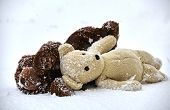 pic of stuffed animals  - Stuffed animal toy teddy bear lost by children in winter storm waiting alone in the cold freezing snow - JPG